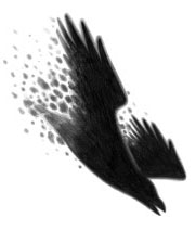 The Flow of Information : Shadow Sendings